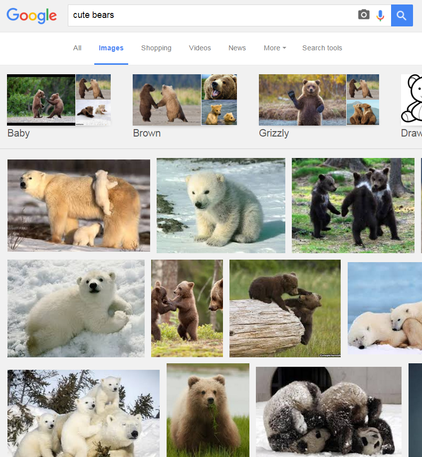 bearsearch1