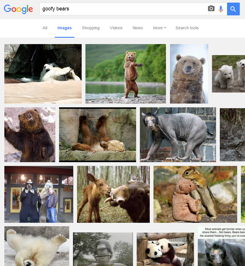 bearsearch5